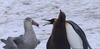 영하 60도, 300일 버텼다…'남극의 눈물' 남자들