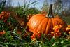 가을에 더욱 빛을 발하는 요리 호박