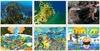 해수부, '바다식목일 기념' 대국민 공모전 개최