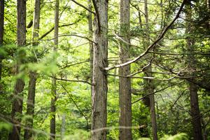나무로 자라는 반려동물용 친환경 유골함 사업[105]