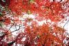 '가을로 물들다' 강원도 유명 산 단풍 절정