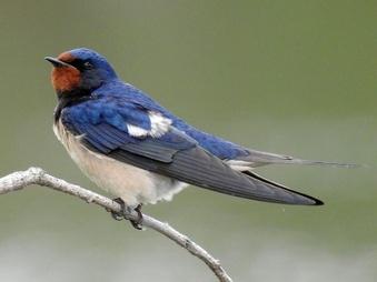 강원도 영동지역의 텃새 및 철새 이야기(32) 강릉의 새