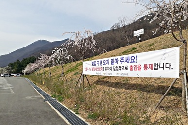 꽃보다 코로나...충주댐 벚꽃길 통제